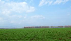 耕作地の景色