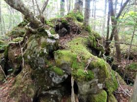 岩に根ざし