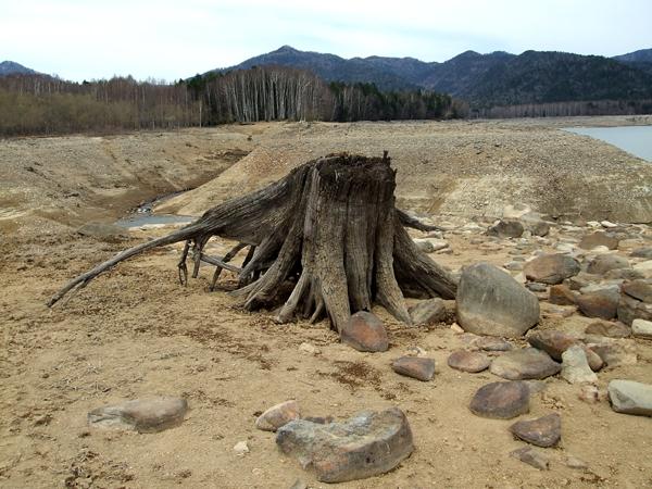 石を集めている